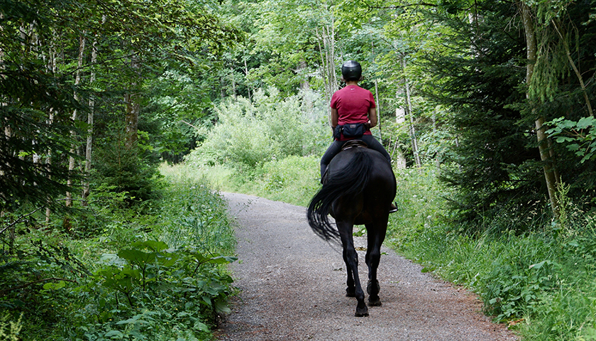 Person horseback riding in a forest.
